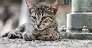 Χανιά: Την έπιασαν την ώρα που πήγε να πουλήσει τα γατάκια