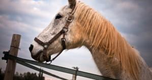 Δύο αδέσποτα άλογα εντοπίστηκαν στην περιοχή των Βασιλειών