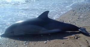 Περίπου 100 δελφίνια εντοπίστηκαν νεκρά στα ανοιχτά της Μοζαμβίκης