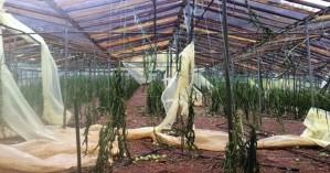 Εσπερίδα για διαχείριση πλαστικών θερμοκηπίων στην Ιεράπετρα
