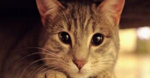 Γάτα επέζησε μετά από 12 λεπτά μέσα πλυντήριο που ήταν σε λειτουργία