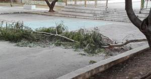 Αποζημίωση 164.280 ευρώ από δήμο, σε συγγενείς 57χρονου που σκοτώθηκε απο πτώση κλαδιού