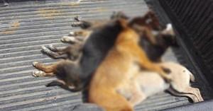 Δοχεία με δηλητηριασμένο γάλα και 30 φόλες εντόπισε εκπαιδευμένος σκύλος