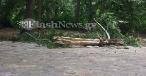 Κορμός δέντρου έπεσε στην πλατεία στον Στύλο Αποκορώνου (φωτο)