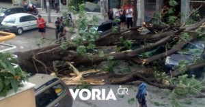 Πτώση δέντρου στο κέντρο της Θεσσαλονίκης - Φθορές σε δύο οχήματα