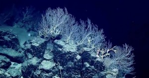 Μια εντυπωσιακή ανακάλυψη σε βάθος 2,3 χιλιομέτρων