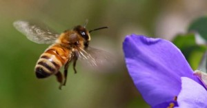 Νεκρός 32χρονος από τσίμπημα μέλισσας