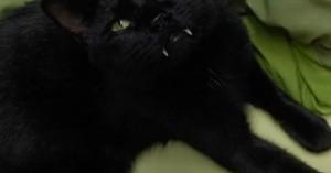 Η γάτα… βρυκόλακας που κάνει τον γύρο του διαδικτύου