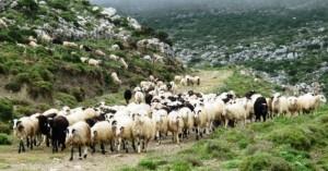 Πληρωμή δικαιούχων προγράμματος «Βιολογική Κτηνοτροφία»