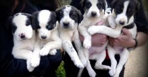 Αν ο σκύλος σας γεννήθηκε καλοκαίρι αντιμετωπίζει ένα σοβαρό κίνδυνο