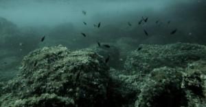 Τα ενθύμια της φρίκης! Εκατομμύρια τόνοι πυρομαχικών στους ωκεανούς!
