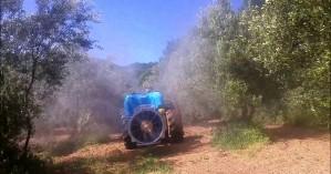 Ξεκινάει ο πρώτος δολωματικός ψεκασμός για τον δάκο στα Χανιά