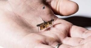 Πέταξε το πρώτο ρομποτικό έντομο χωρίς καλωδιακή σύνδεση