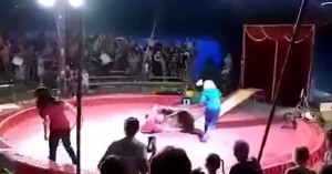 Αρκούδα επιτέθηκε στον θηριοδαμαστή της σε ρωσικό τσίρκο