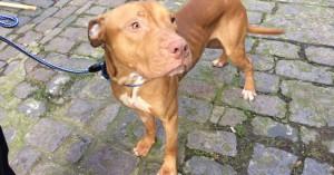 Θανάτωσαν άκακο σκυλί γιατί «έμοιαζε επικίνδυνο»