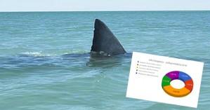 Συνολικά 5 είδη καρχαριών καταγράφηκαν τον Μάιο στις ελληνικές θάλασσες