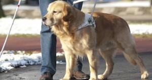 Καφετέρια αρνήθηκε να δώσει νερό σε σκύλο-οδηγό