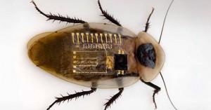 Αυτή η τσιπαρισμένη κατσαρίδα μπορεί να κάνει θαύματα για τον άνθρωπο