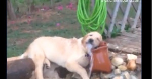 Viral ο σκύλος που ξεδιψά παίζοντας με το νερό!