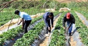Αυξάνονται οι άδειες ξένων εργατών στο Λασίθι