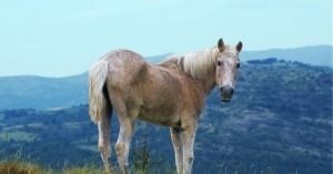 Ζωοκλέφτης σκότωνε άλογα στην Έδεσσα