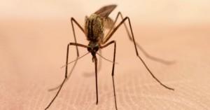 Ενισχύονται οι δράσεις για την πρόληψή του ιού του Δυτικού Νείλου