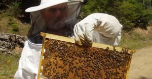 Το νέο Δ.Σ του Μελισσοκομικού Συλλόγου Χανίων