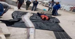 Ψαράδες δεν πίστευαν στα μάτια τους με αυτό το θαλάσσιο «τέρας» που έβγαλαν