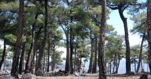 Πεζοπορία στο δάσος του Σελάκανου
