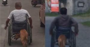 Σκύλος βοηθάει το αφεντικό του που είναι καθηλωμένο σε αναπηρικό αμαξίδιο!
