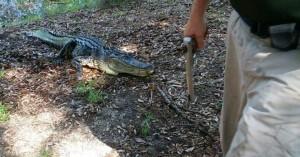 Αλιγάτορας επιτέθηκε και σκότωσε 45χρονη που είχε βγάλει βόλτα το σκύλο της