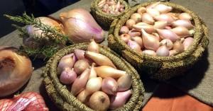 Η 3η γιορτή κρεμμυδιού στους Κασσάνους του Δ. Μινώα Πεδιάδας