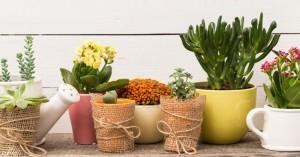 Τα φυτά που δημιουργούν μια όαση δροσιάς στο σπίτι το καλοκαίρι