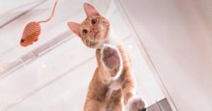 Δέκα παράξενες αλήθειες για τις γάτες που ίσως δεν γνωρίζετε