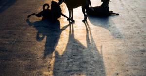 Χρηματοδότηση σε οκτώ Δήμους της Κρήτης για τα αδέσποτα ζώα