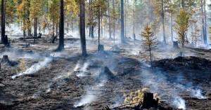 Δεν προκαλούν ανησυχία οι μετρήσεις του αέρα στα καμένα της Αττικής
