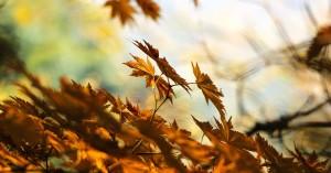 Μπαίνει το φθινόπωρο τα χαράματα της Κυριακής με τη φθινοπωρινή ισημερία