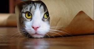 Το κρεβατάκι της γάτας έκρυβε μια ιδιαίτερη έκπληξη για τον ιδιοκτήτη