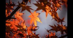 Φθινοπωρινή ισημερία: Γιατί δεν είναι ακριβώς ίση η διάρκεια μέρας & νύχτας