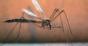 Το πρόγραμμα εφαρμογών καταπολέμησης κουνουπιών