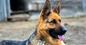 Ηλικιωμένη πέθανε μετά από επίθεση σκύλου της αστυνομίας μέσα στο σπίτι της