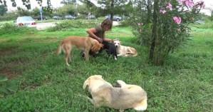 Τα σκυλάκια του νοσοκομείου Χανίων ψάχνουν σπίτι - Βοηθήστε να βρουν ένα