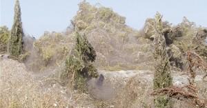 Μετά το Αιτωλικό η Βιστωνίδα: «Πέπλο» ιστών κατάπιε 1000 μ. βλάστηση