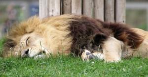 Υπάλληλος στο τμήμα προστασίας άγριας ζωής σκότωσε δεκάδες άγρια ζώα