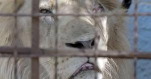 Εικόνες που σοκάρουν σε ζωολογικό κήπο της Αλβανίας