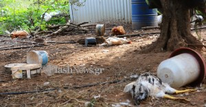 Τρόμος από επιδρομές αδέσποτων σκυλιών στα Χανιά (σκληρές εικόνες)