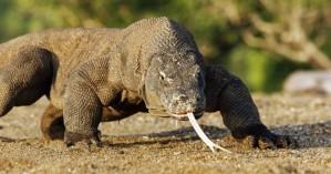 Τα πιο φονικά ζώα της γης σώζουν με το δηλητήριό τους εκατομμύρια ανθρώπους