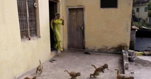 Μαϊμού άρπαξε βρέφος από την αγκαλιά της μαμάς του και το σκότωσε