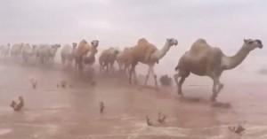 Εικόνες αποκάλυψης: Πλημμύρισε η έρημος στη Σαουδική Αραβία