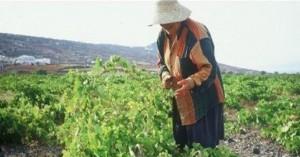 Λήγει στις 9 Νοεμβρίου η προθεσμία για το βοήθημα σε πολύτεκνες αγρότισσες